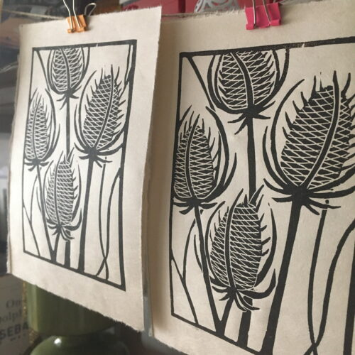 A row of linocut prints of Teasels hanging up drying, they are dark brown ink on Awagami paper
