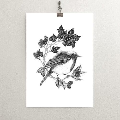 White Thistle Design, Christmas Robin Print Illustration